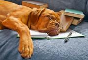 Foto Akademiker Hund mit Brille